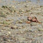 les gravats de la plage