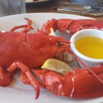 A one and a half pound lobster at Robert's