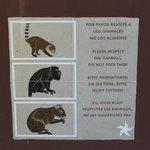 Floresta - observação de animais