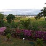 Bougainvillea dominated view