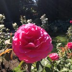 Rose Garden 2014