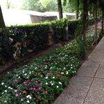 la via principale decorata di fiori