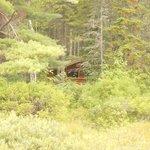 hutte de trappeur dans le domaine