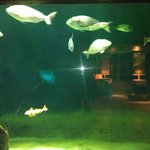 fishtank2