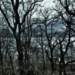 Loch Lomond through the trees and mist