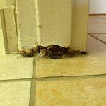 Bathroom door threshold