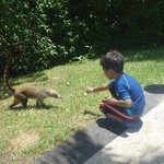 Coatis. He's pretending to feed it. It's really a leaf