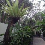 Pleasant walkways through villas