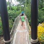 Bridge in gardens