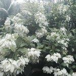 Hunte's Gardens Photo