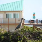 Heron in front of the restaurant