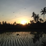Sunrise from the rice field