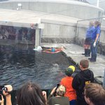 They put on a show about the Harbor Seals that was pretty neat and informative.