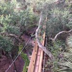 Bridge canopy walk