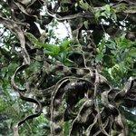 Monkey ladder tree