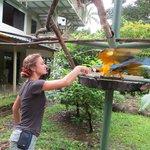 Feeding the macaw