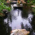 Bassin à coté de la réception