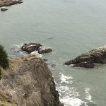 look for Sea Lions in water and on rocks.