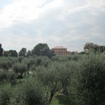 Musee Matisse: olive trees and parkland surrounding museum