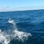 Pointed Dolphins followed and played around the boat -pure magic