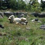 Der happy Eisbär