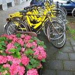 So many bikes .....!