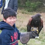My son and a Harris' Hawk