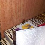 roach under night stand