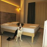 Pet friendly- hotel