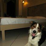 Pet friendly- hotel