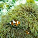 excursion snorkeling à sur l'île de Mantabuan