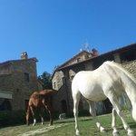Photo of Agriturismo Antico Podere Il Prato