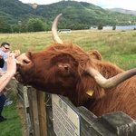 From the Hairy Coo day