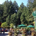 Coffee Shop Buchart Gardens near Victoria