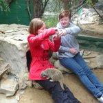 Teenagers meeting the meerkats