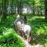 Serene horseback trail with nature surrounding...