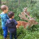 Мой сынуля с новым другом и олени которые ну очень терпеливые!