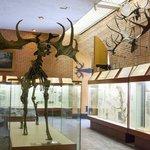 Orlov Palaeontolggy Museum