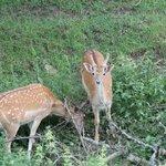 Deer preserve