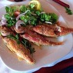 Рыба Краснолобик