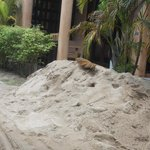 sand pit next to my room