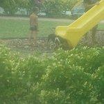 cane libero in area giochi bimbi a fare i bisogni