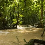 Flooded forest floor