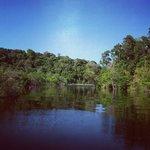 Lago Salvador cercado pela Floresta Amazônica à margem do Rio Negro