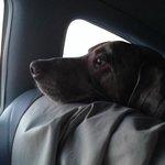 Our dog Austin