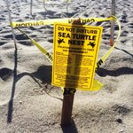 Turtle nests on the beach.