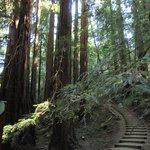 Enchanting Muir Woods