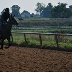 Training a racehorse