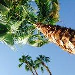 Hi palmtree!