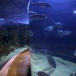 Under the aquarium...